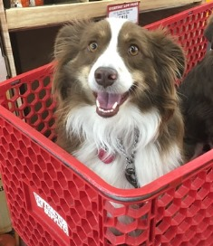 bear in cart